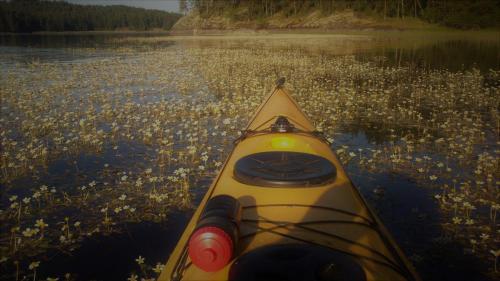 Järvi kukkii